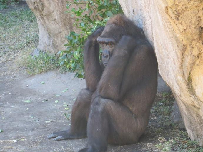 Nola Zoo