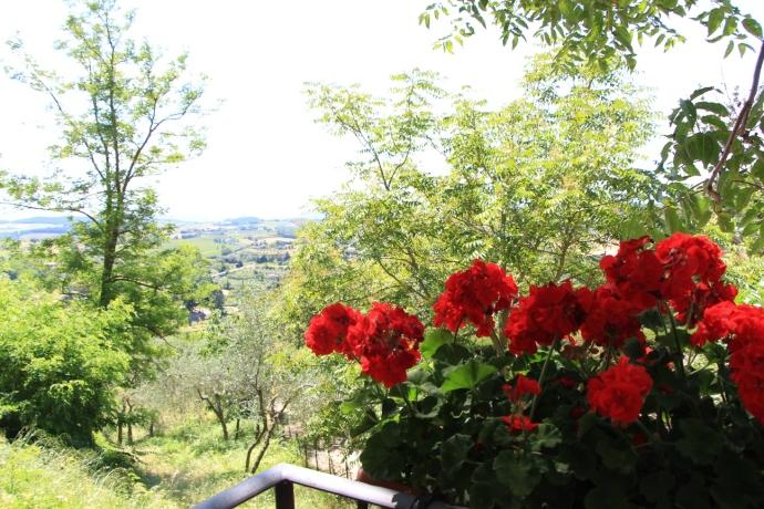Gattavecchi