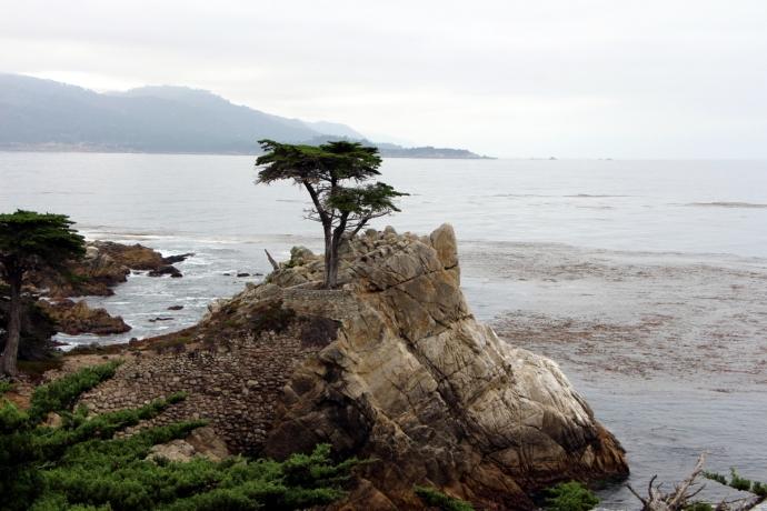 California-2015 1261